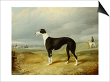 A Black and White Greyhound in an Open Landscape, with Hunters and Huntsmen Beyond Posters by John Barwick