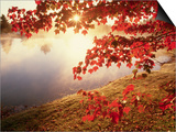 Sunrise Through Autumn Leaves Posters by Joseph Sohm