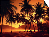 Palm Trees at Beach Prints by Jack Hollingsworth