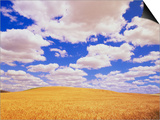 White Clouds Over Wheat Field Poster by Darrell Gulin