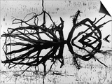 Stump, Alaska, 1973 Prints by Brett Weston