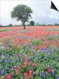 Field of Red and Blue Flowers Art by Jim Zuckerman