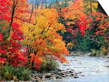 Rivière dans les bois en automne Posters par Jack Hollingsworth