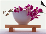 Magenta Orchids in White Bowl Prints by Colin Anderson