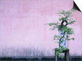 Tree in Vase and Pink Wall Prints by Paul Souders