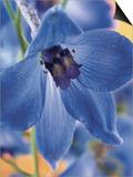 Blooming Delphinium Plakater
