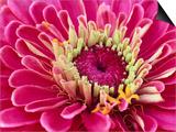 Pink Flower Art by Robert Marien