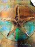 Starfish Posters by Colin Anderson