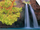 Havasu Falls Prints by Ron Watts