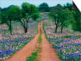 Wildflowers Along a Dirt Road Prints by Cindy Kassab