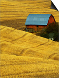 Barn and Golden Wheat Field Art by Robert Crum