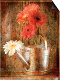 Gerbera Daisies in a Watering Can Prints by Colin Anderson