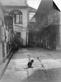 A Cat in a New Orleans Courtyard Print