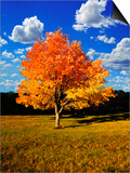 Tree in Autumn Prints by Randy Wells