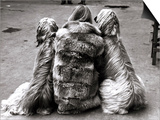 Jackie Faith and Her Afghan Hounds, March 1968 Prints