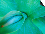 Agave Plant Detail, University of North Carolina at Charlotte Botanical Gardens, USA Posters by Brent Bergherm