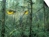 Montage, Owl, Forest, Oregon, USA Poster von Nancy Rotenberg