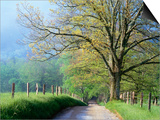 Cades Cove Lane in Great Smoky Mountains National Park Print by Darrell Gulin