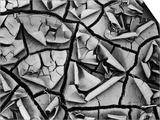 Mud Cracks by Brett Weston Posters by Brett Weston