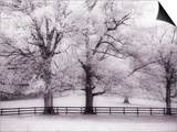 Trees and Fence in Snowy Field Prints by Robert Llewellyn