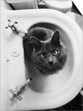 Cat Sitting In Bathroom Sink Art by Natalie Fobes