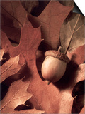 Autumn Acorns and Leaves Print by William Whitehurst