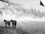 Winter Wonderland: Snow Scene in the Lake District, January 1946 Prints