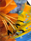 Abstract of Lily Stamens in Reflection Poster von Nancy Rotenberg