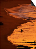 Surfer at Dawn, Gibson's Beach, Twelve Apostles, Port Campbell National Park, Victoria, Australia Posters by David Wall