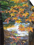 Stream and Fall Foliage, New Hampshire, USA Poster von Nancy Rotenberg