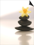 Flower Balancing on Rocks Posters by Tom Grill