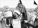 Grand National Winner Red Rum with Trainer Ginger Mccain Drinking from Bucket Art