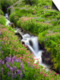 Elk Cove Creek Flowing Through Meadow of Wildflowers, Mt. Hood Wilderness, Oregon, USA Prints by Steve Terrill