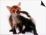 A Tale of Two Cubs, She's Always Badgering That Fox for a Kiss Posters