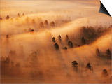 Pine Forest in Morning Fog, Minnesota, USA Print by Richard Hamilton Smith