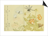 Illustration from A Picture Book of Selected Insects Prints by  Utamaro