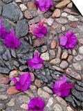 Fallen Bougainvillea Petals on Cobblestones, San Miguel De Allende, Mexico Kunst von Nancy Rotenberg