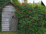 Outhouse Built in 1929 Surrounded by Blooming Elderberrys, Homer, Alaska, USA Prints by Dennis Flaherty