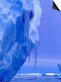 Blue Icebergs, Antarctica Posters by Joe Restuccia III