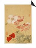 Amapolas Láminas por Yun Shouping