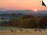 Horses Graze at Sunrise, Provence, France Print by Jim Zuckerman