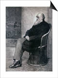 Portrait of Charles Darwin Posters
