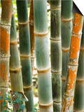 Bamboo, Doi Suthep, Thailand Prints by Kristin Piljay