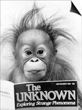 Orangutang, October 1986 Prints