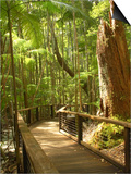 Boardwalk by Wanggoolba Creek, Fraser Island, Queensland, Australia Prints by David Wall