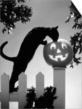 1970s Black Cat and Jack-O'-Lantern on Fence Poster