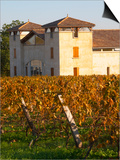 Winery Building and Golden Vineyard in Late Afternoon, Domaine Des Verdots, Conne De Labarde Prints by Per Karlsson