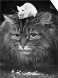 Animal Friendships: Cats and Mice Prints