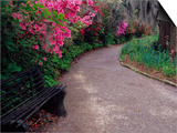 Pathway and Bench in Magnolia Plantation and Gardens, Charleston, South Carolina, USA Posters by Julie Eggers