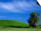 Lone Tree in Wheatfield, Whitman County, Washington, USA Posters by Julie Eggers